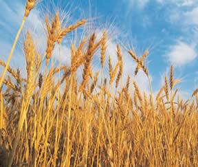 L'importanza della fibra nella quotidianità della nostra alimentazione.